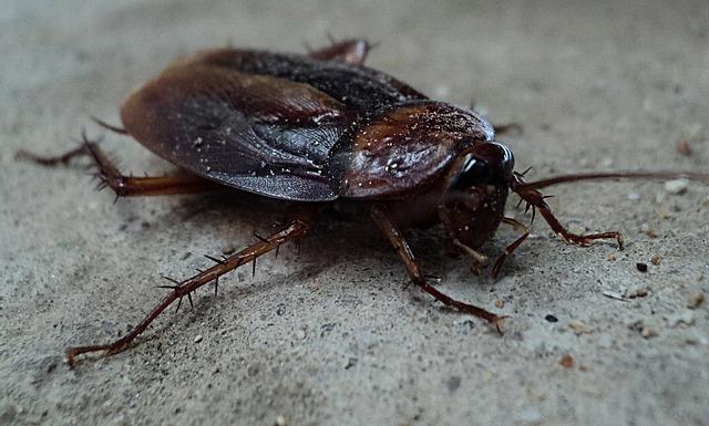 cockroach 70295_640